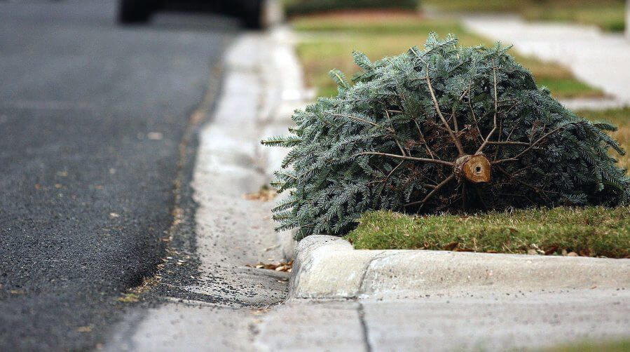Christmas Tree Laying by the Curb